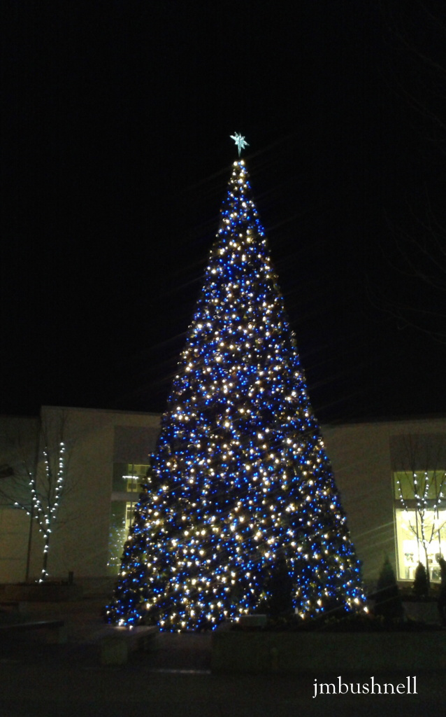 Lit tree in Charlotte North Carolina Holidays 2013