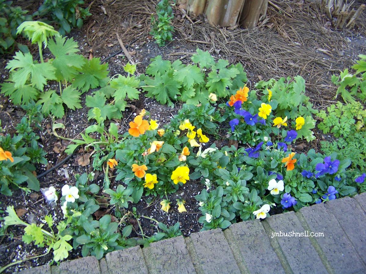 Blooms in Savannah, Georgia