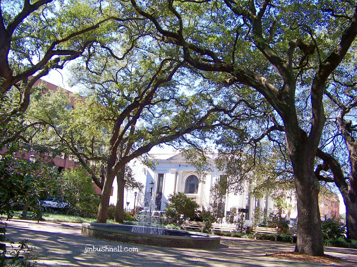 Canopy of Trees in Savannah, Georgia