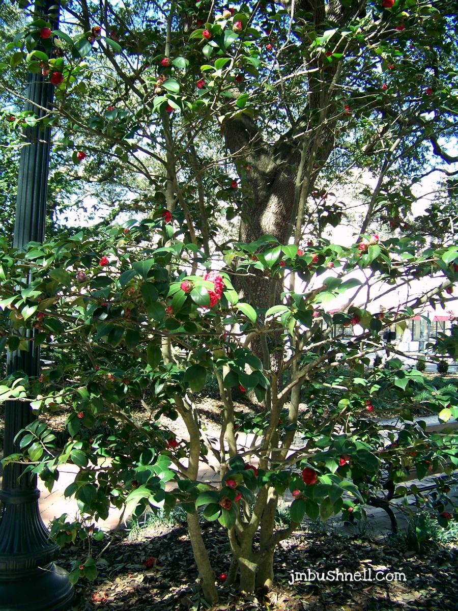 Savannah, Georgia is in Bloom