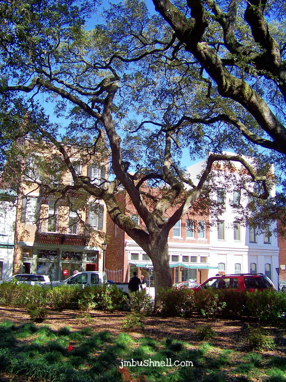 Trees in Historic Savannah, Georgia