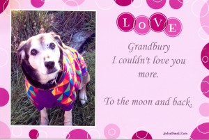 Photo of Jeannie's dog, Grandbury