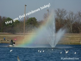 Rainbow in Charlotte, NC