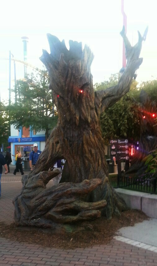 scarowinds tree
