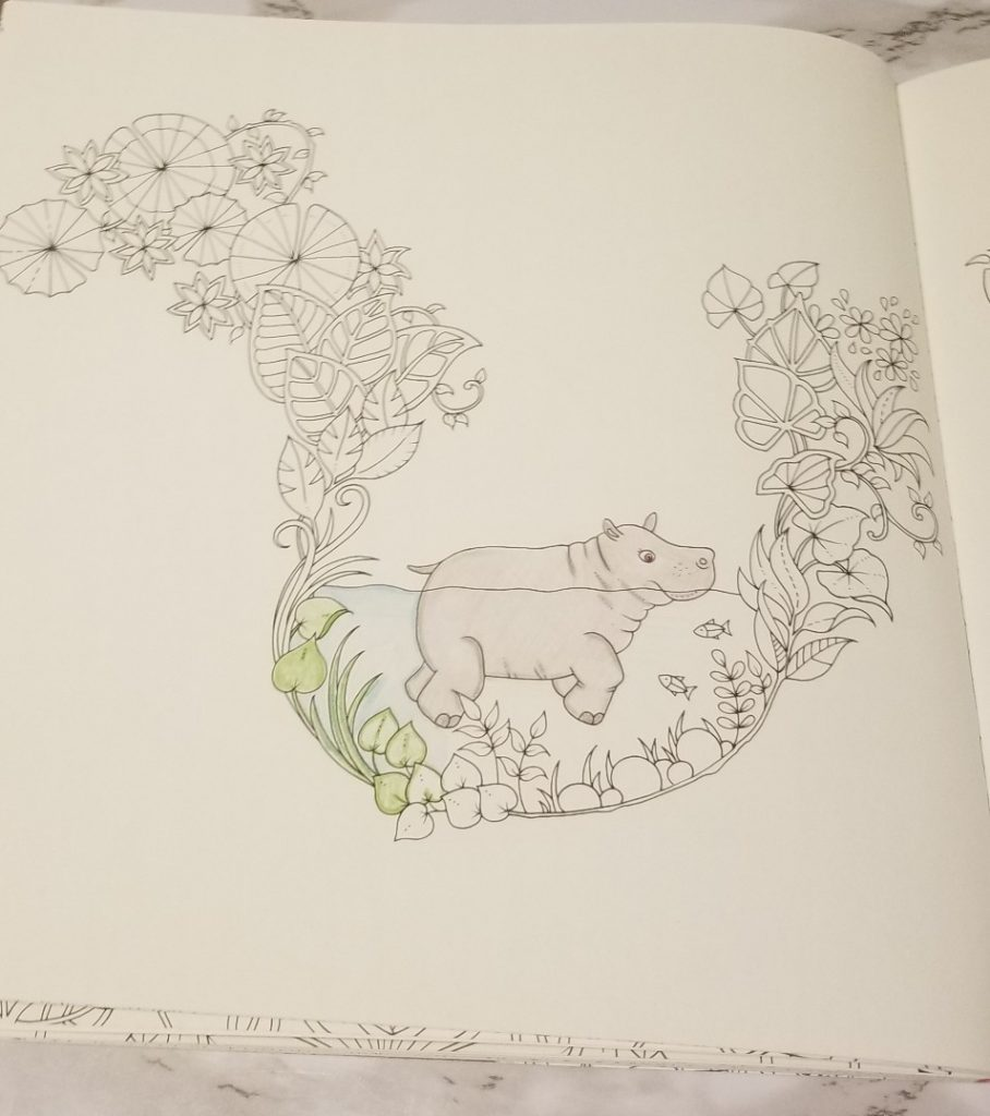 hippo in water to color
